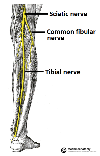 Painful spot on the inside of my shin bone?